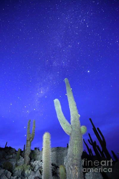 Photograph - Southern Hemisphere Night Sky And Cactus by James Brunker