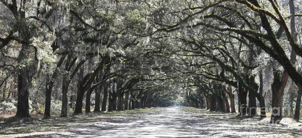 Photograph - Southern Homecoming by Carol Groenen