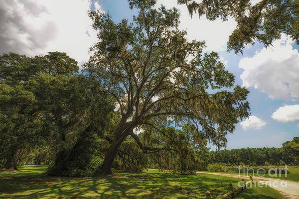 Photograph - Southern Journey Paradise by Dale Powell
