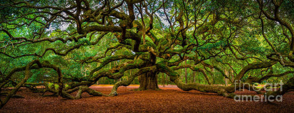 Angel Oak In Charleston Art Print