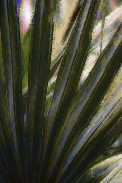 Photograph - Southern Palms by Donna Bentley