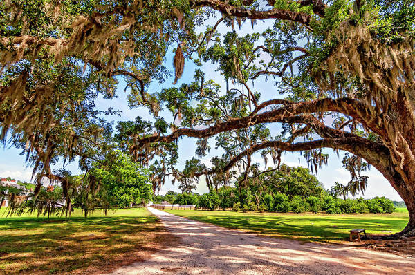 Steve Harrington Wall Art - Photograph - Southern Serenity by Steve Harrington