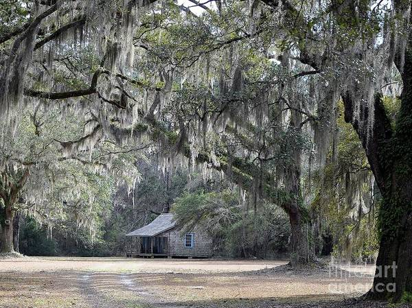 Mossy Photograph - Southern Shade by Al Powell Photography USA