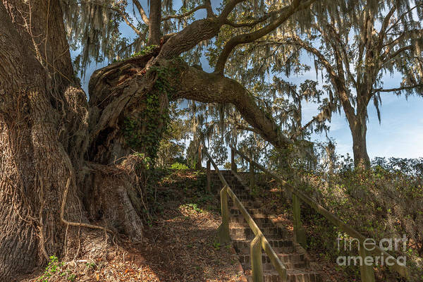 Photograph - Southern Step Up by Dale Powell