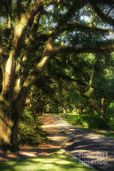 Photograph - Southern Sunshine by Mel Steinhauer