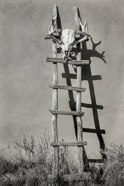 Wall Art - Photograph - Southwest Kiva Ladder And Skull by Steven Bateson