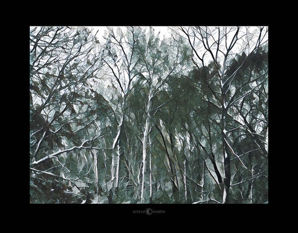 Photograph - Southwind Winter Woods by Tim Nyberg
