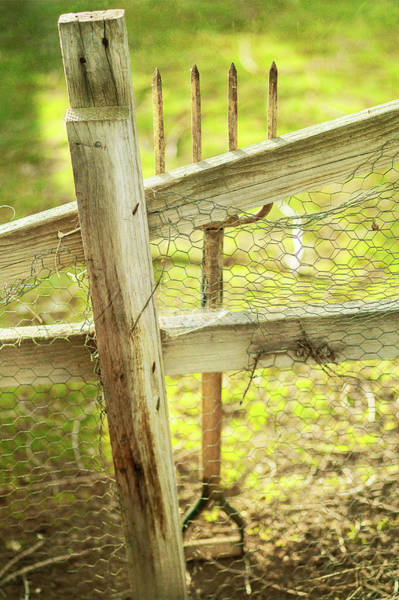 Green And Gray Photograph - Spading Fork On Chicken Wire Fence by YoPedro