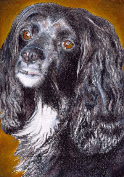 Painting - Spaniel Eloquence by Joe Dagher