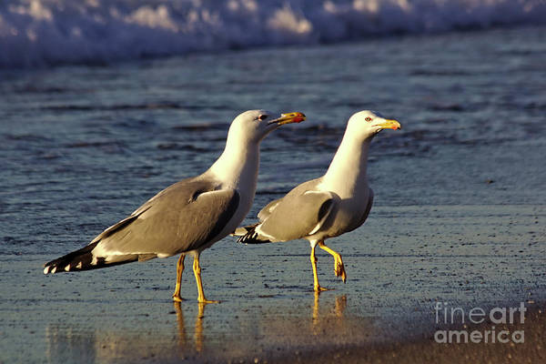 Photograph - Spanish Gulls On The Beach by Jeremy Hayden