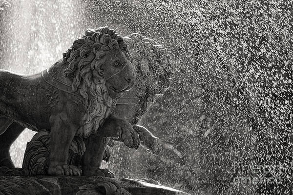 Water Fountain Photograph - Spanish Lions by Rod McLean