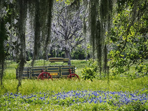 Photograph - Spanish Moss by Charles McKelroy