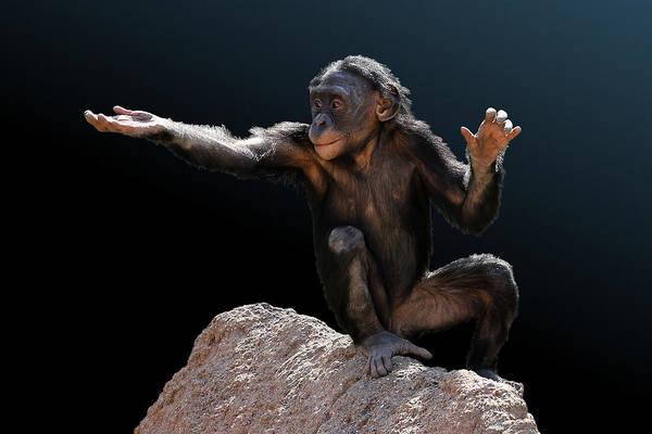 Photograph - Spare Change? - Bonobo by Debi Dalio