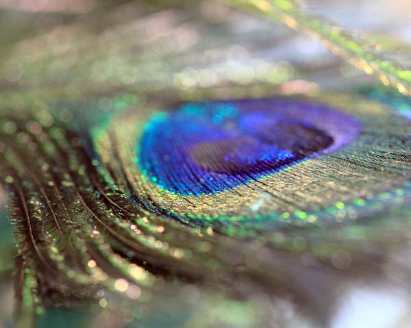 Photograph - Sparkling Peacock Feather by Angela Murdock