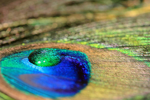 Photograph - Sparkling Water Drop by Angela Murdock