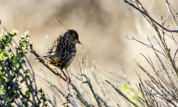 Snarky Sparrow Art Print