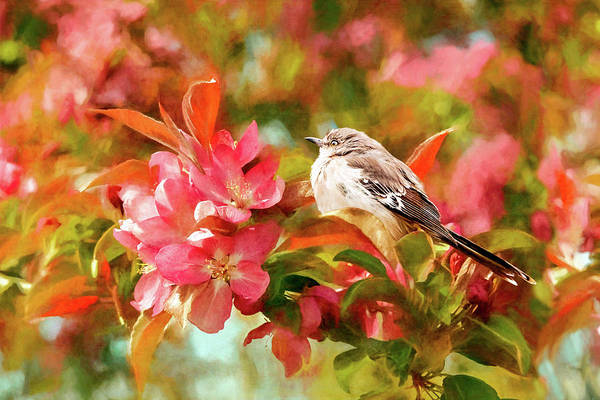 Wall Art - Photograph - Sparrow In The Apple Tree by SharaLee Art