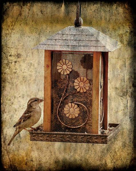 Photograph - Sparrow On The Feeder by Angie Tirado