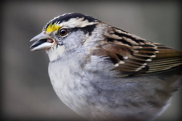 Photograph - Sparrow by Patricia Montgomery