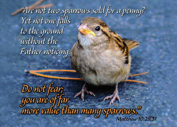 Sparrow Scripture Matthew 10 Art Print
