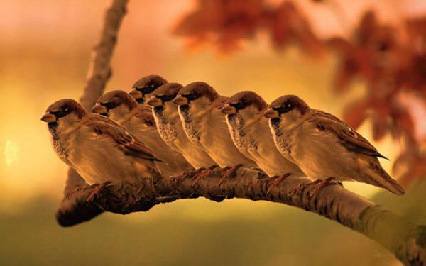 Photograph - Sparrow Sunset Line by Ericamaxine Price