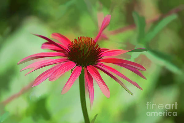 Photograph - Spash Of Red by Susan Warren