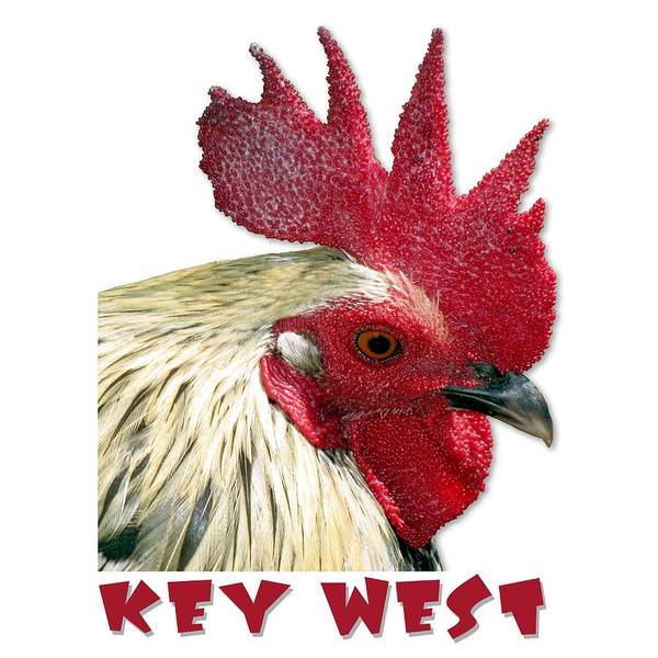Photograph - Special Edition Key West Rooster by Bob Slitzan