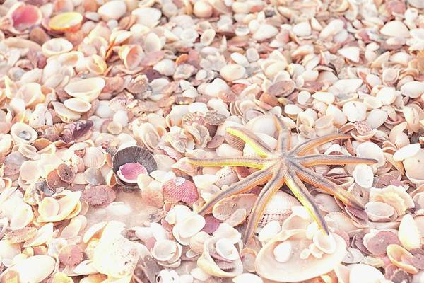 Photograph - Special Starfish And Shells by Framing Places