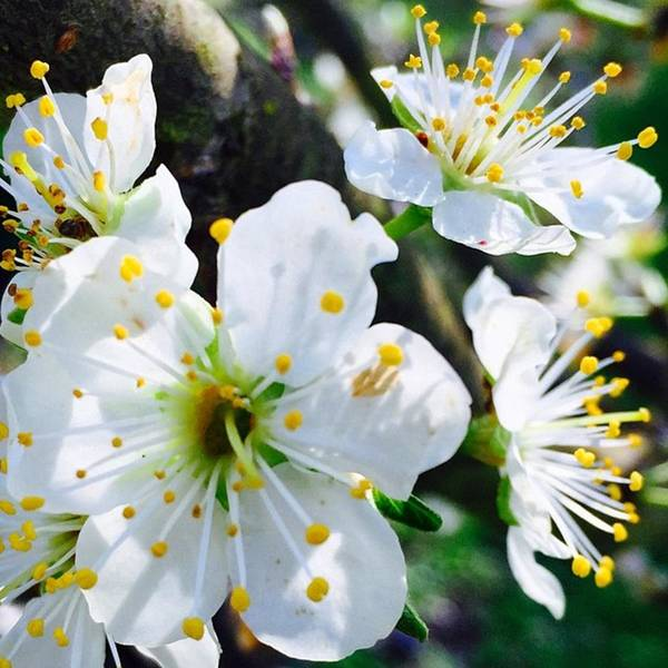 Blossom Photograph - Spent The Afternoon Pulling Weeds Under by Blenda Studio