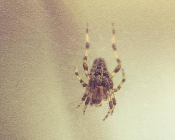 Photograph - Spider At The Web A Fine Art by Jacek Wojnarowski