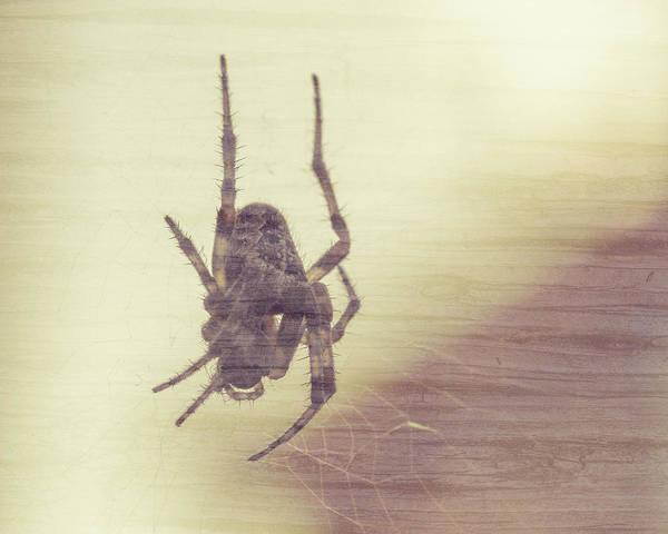 Photograph - Spider At The Web B Fine Art by Jacek Wojnarowski
