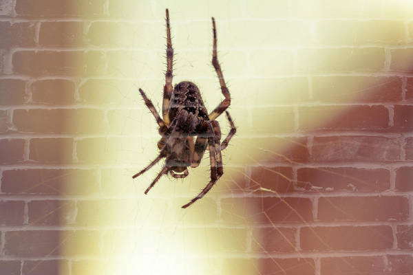 Photograph - Spider At The Web C Fine Art by Jacek Wojnarowski