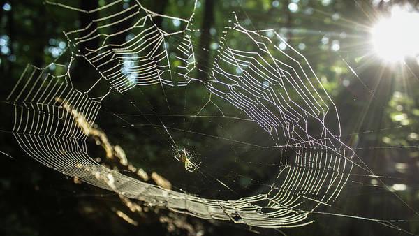 Photograph - Spider Light by Tyson Kinnison