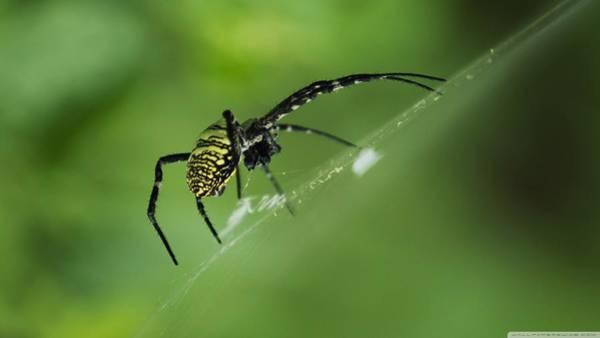 Digital Art - Spider by Maye Loeser