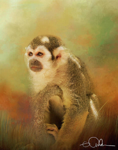 Digital Art - Spider Monkey by Gloria Anderson