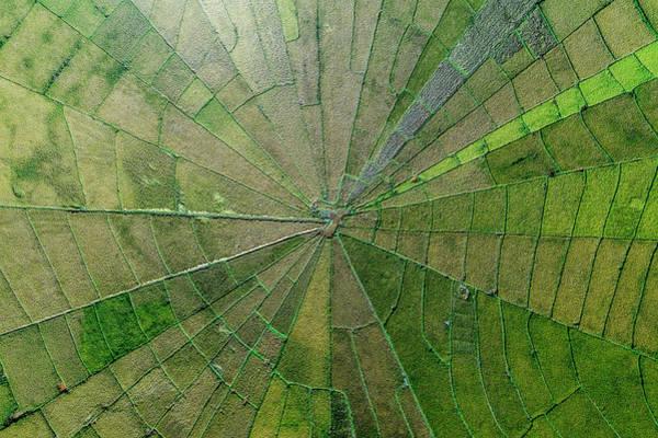 Photograph - Spider Net Paddy Field by Pradeep Raja PRINTS