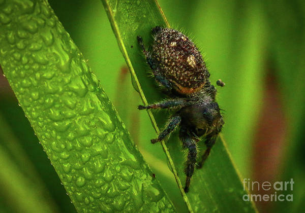 Photograph - Spider On Blade Of Grass by Tom Claud