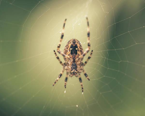 Photograph - Spider On The Web A by Jacek Wojnarowski