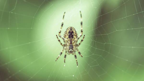 Photograph - Spider On The Web B by Jacek Wojnarowski