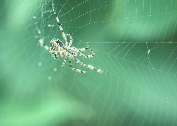 Photograph - Spider On The Web C by Jacek Wojnarowski