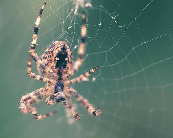 Photograph - Spider On The Web E by Jacek Wojnarowski