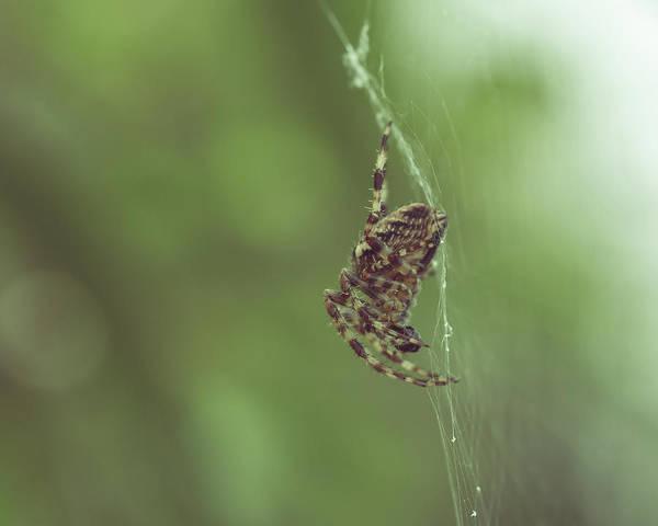 Photograph - Spider On The Web F by Jacek Wojnarowski
