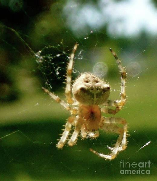 Photograph - Spider by 'REA' Gallery