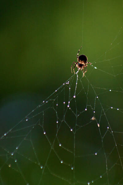 Photograph - Spider Web 2 by George Cabig