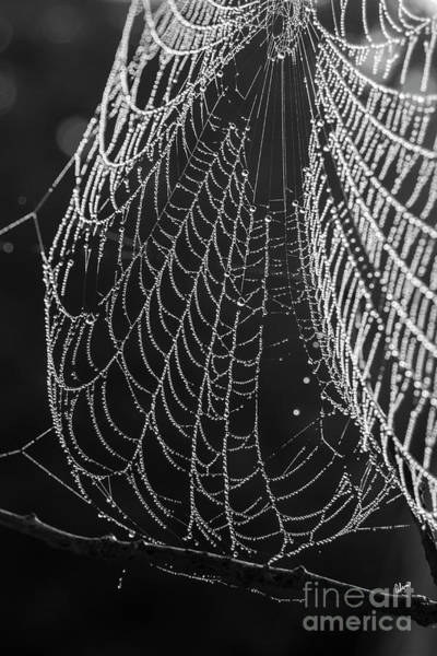 Photograph - Spider Web Dew by Alana Ranney