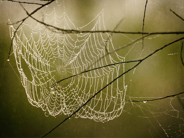 Photograph - Spiders Web by Charles McKelroy