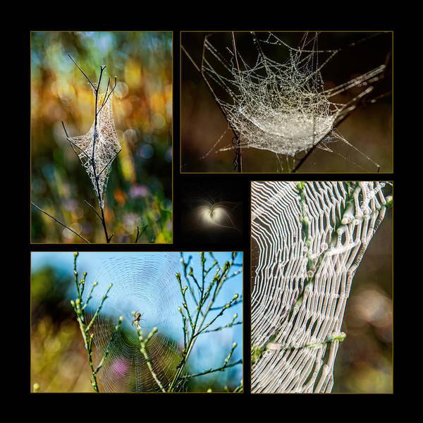 Photograph - Spiderweb Beauty Architecture  by Christina VanGinkel