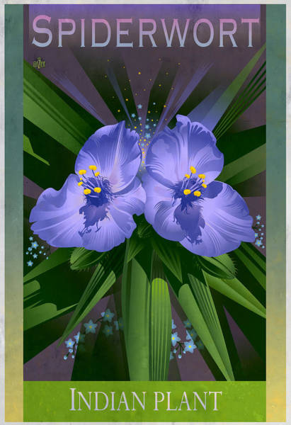 Native Garden Wall Art - Painting - Spiderwort Indian Plant Floral Poster by Garth Glazier