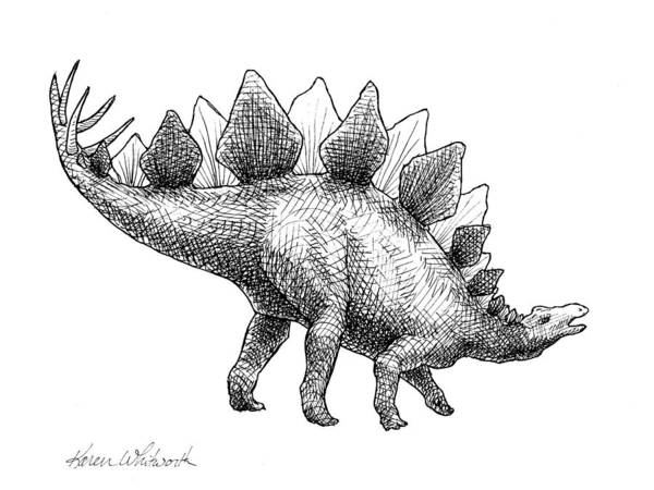 Drawing - Stegosaurus - Dinosaur Decor - Black And White Dino Drawing by Karen Whitworth
