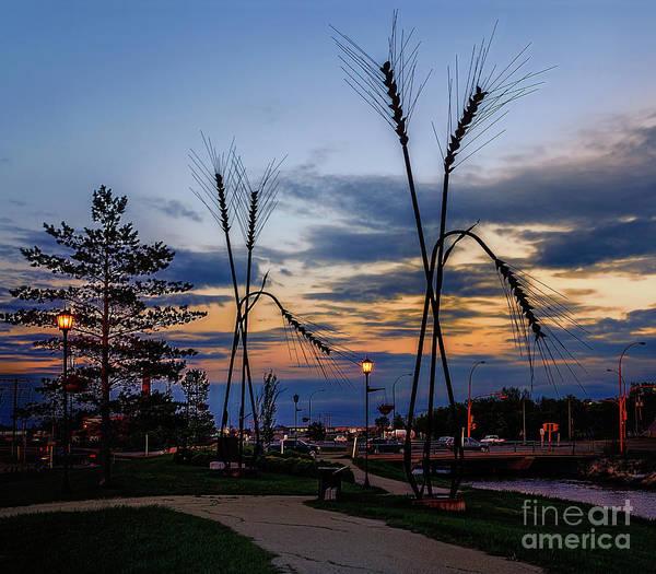 Evening Wall Art - Photograph - Spikelets On Sunset. by Viktor Birkus
